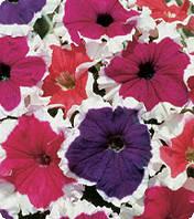 Петуния крупноцветковая Серенада Микс