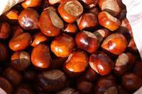 Каштан конский (Aesculus Hippocastanium, carpus Horse chestnut) плоды 100 грамм