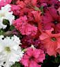 Петуния Крупноцветковая Ямамото Микс  250с