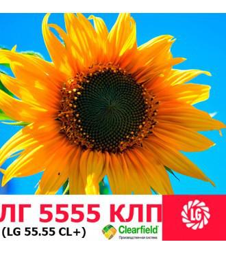 Семена подсолнечника ЛГ 5555 Limagrain