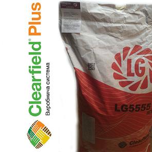 Семена подсолнечника ЛГ 5555 Limagrain, фото 2