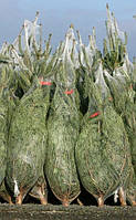 Упаковочная сетка для ёлок и сосен 45 см 300м