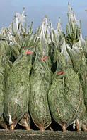 Упаковочная сетка для ёлок и сосен Ø 45 см 300м