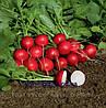 Семена редиса Ролекс F1 2,75-3,0 5000 сем. Бейо заден.