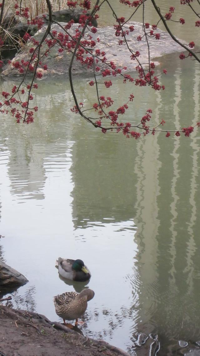 Раздел Юбки - фото teens.ua - весна в Центральном парке