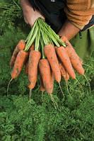 Семена моркови Кардиф F1 2,0-2,2 1 00 000 сем. Бейо заден., фото 1