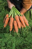 Семена моркови Кардиф F1 2,2-2,4 1 00 000 сем. Бейо заден., фото 1