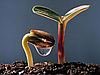 Гумат Калия Экстра для подкормки Подсолнечника, Гуминовые кислоти 60 гр/л + Фульво кислоты + Азот. Внесение в норме 0,3-0,4 л/га/тн.