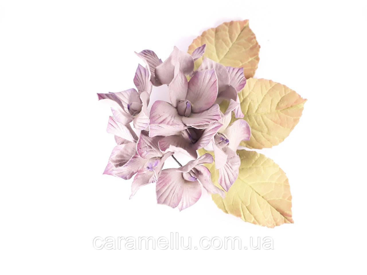 Гортензия соцветие Серый