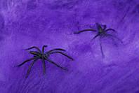 Паутина фиолетовая с пауками - декор на хэллоуин!