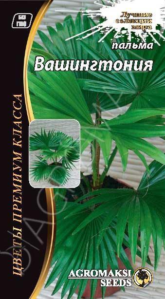Пальма Вашингтония 5 сем Agromaksi