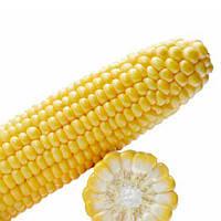 Семена кукурузы Мируш 5000 сем. компании Семенис