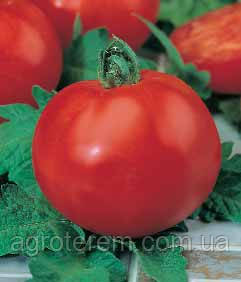 Семена томатов -  сорт или гибрид?