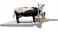 Строительство коровников беспривязного содержания коров. Бетонные работы.
