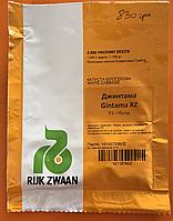 Капуста Джинтама  F1 2500 с. каліброване Rijk Zwaan