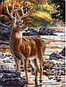 Картина по номерам Олень на водопое (AS0163) 40 х 50 см ArtStory