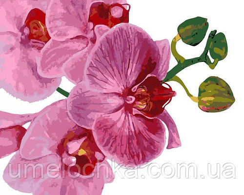 Картина по номерам Розовая орхидея (AS0124) 40 х 50 см ArtStory