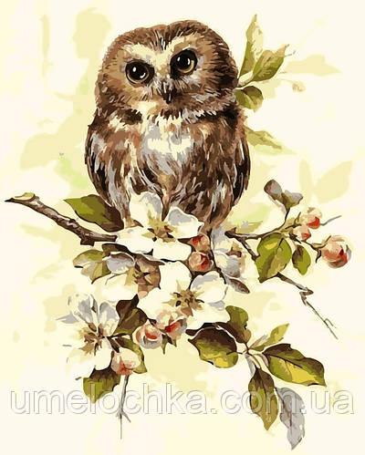 Картина по номерам Сова на ветке яблони (AS0164) 40 х 50 см ArtStory