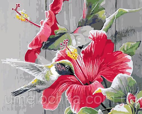 Раскраска для взрослых Колибри с цветком (AS0179) 40 х 50 см ArtStory