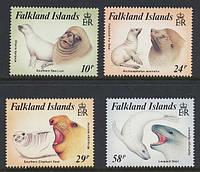Тюлені - Фолклендські острови / Falkland Islans