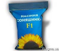 Семена подсолнечника  под Евролайтинг Богдан экстра ,(масса тысячи 66 грамм., фракция 3,2-3,4)