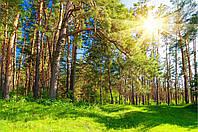 Фотообои природа, лес