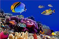 Фотообои водный мир