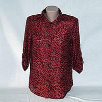 Новая блузка женская цвет бордо  Stradivarius S