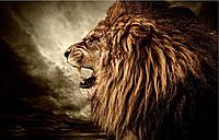 Фотообои  лев рычит