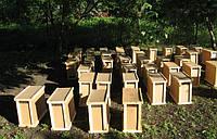 Продам ОПТОМ САМОВЫВОЗ Пчелопакеты Карпатка 4 рамки 3+1 без ящика