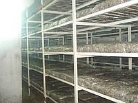 Вентиляция грибниц, фото 1