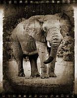 Фотообои слон фото