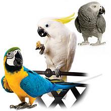 Крупные попугаи-ара, какаду, амазон, жако .