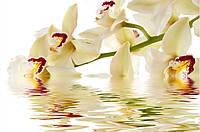 Фотообои орхидея беж