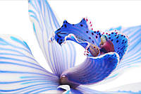 Фотообои середина орхидеи