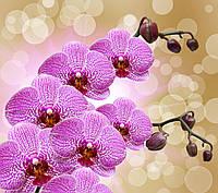Фотообои орхидеи ветка