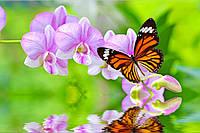 Фотообои орхидеи и бабочка