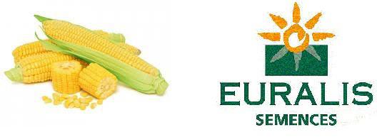 Cемена кукурузы Euralis (Евралис)