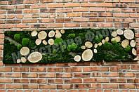Панно зі зрізами, корою і стабілізованою мохом, фото 1