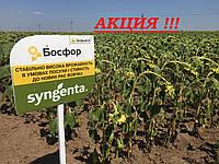 Босфора Сингента семена подсолнечника высокоурожайный гибрид устойчив к заразихе и засухе