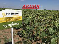 Семена подсолнечника Неома Экстра Сингента (под Евролайтинг) 2016, 2017 высокоурожайный гибрид, фото 1