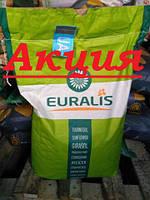 Белла Евралис импорт 2017 экстра, один из лидеров  по урожайности и засухоустойчивости