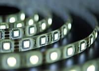 Светодиодная лента SMD 5050/60 IP54 премиум, фото 1