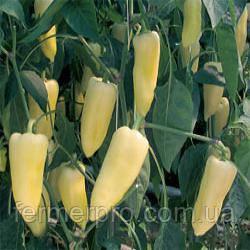 Семена перца Центури F1 Rijk Zwaan 1000 семян