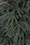 5 причин выбрать искусственную елку
