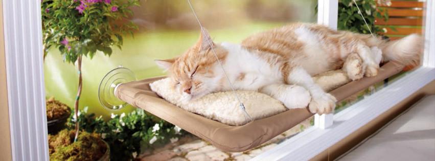 Картинки по запросу Оконная кровать для кота