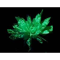 Краска светящаяся AcmeLight для цветов зеленая 20мл