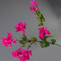 Бугенвиллея розовая.