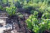 Капельница для полива Presto-PS микроджет Зонт-В (MS-1101-В), фото 9