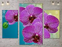 Модульные Картины, Орхидея, Art. FLOW777027